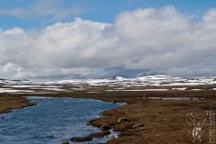 Minotaurus_Hardangervidda