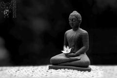 Minotaurus_Sereen_Buddha